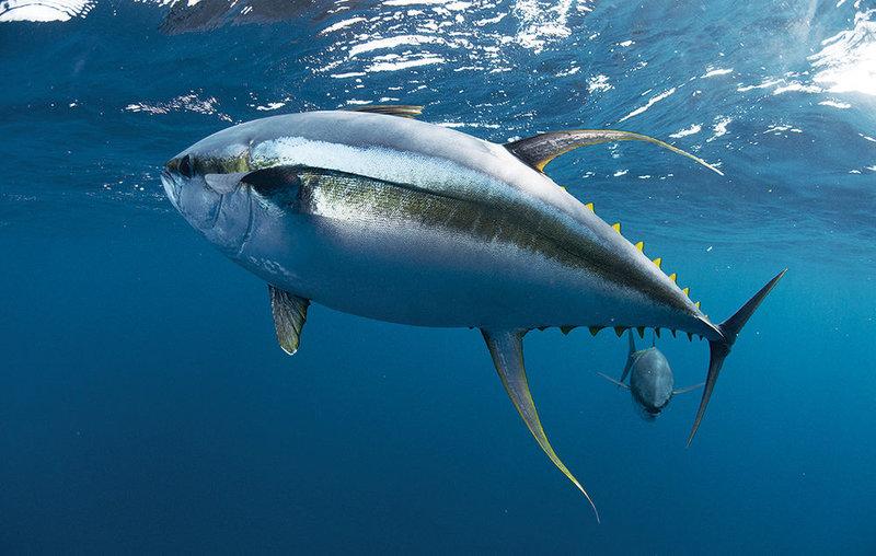 tuna-fishing-in-louisiana.jpg