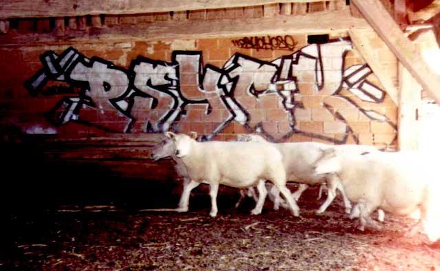 psyck_sheeps.jpg.96b87509e172e26e6ab351f90b096d54.jpg