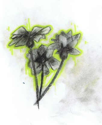 flowers.jpg.025a31aa99e2d2908bb1e374f89f9de6.jpg