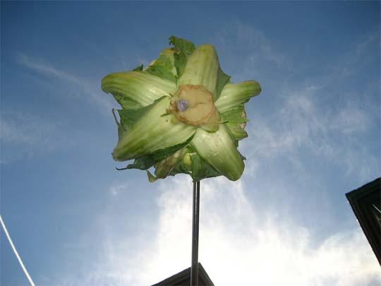 12_cauliflower.jpg.f87f20392efe53a2de66c51b743354e5.jpg