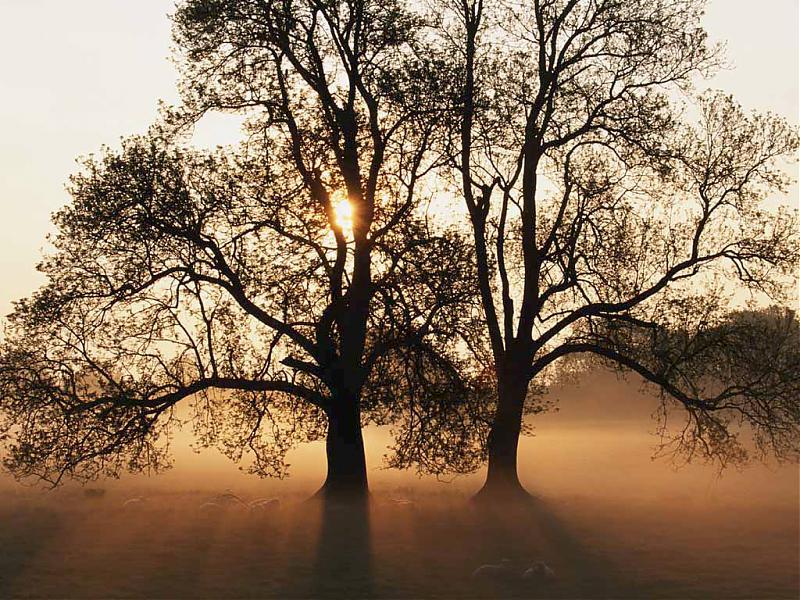 Tree.jpg.e666cb906abe8e55902029130c9eed65.jpg