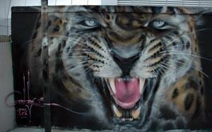leopard.jpg.428ba8e13c145f8baeeeb643749bd935.jpg
