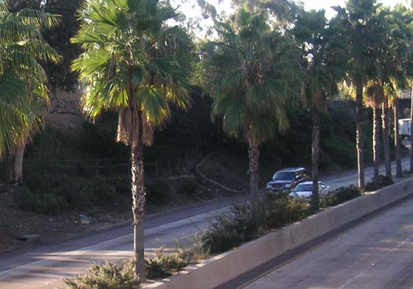 Freeway2.jpg.d6ba5ffef855404057abee03ee11f49e.jpg