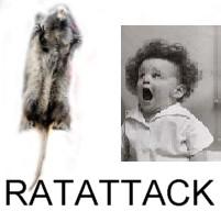 rat.jpg.5caacd91fd653faed7a7a8bc4d5a1e7d.jpg