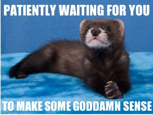 patiently-waiting-for-you-to-make-some-goddamn-sense-500x378.jpg.8983ccb423b3787d8414438064cb430f.jpg