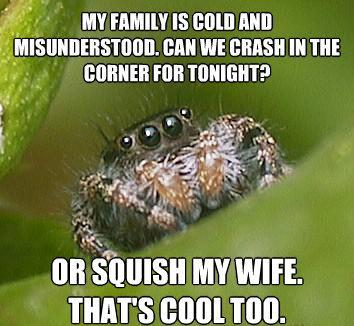 misunderstood-spider-meme-squish-wife.jpg.d86f5eda21eda96c5f4d9e5f75445d17.jpg