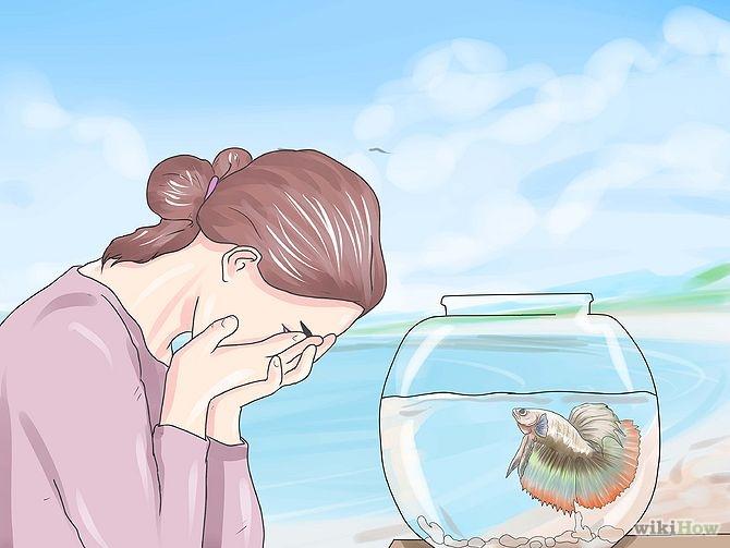 670px-Grow-a-Bond-With-Your-Betta-Fish-Step-7.jpg.752e6ce116eda4ffb48cf70f6acbffae.jpg