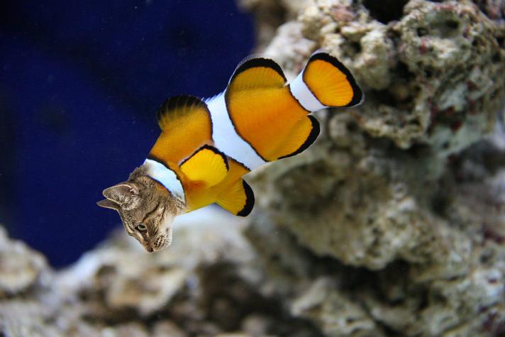 catfish.jpg.c3d856cf41a2563488e8efb85bb9a07a.jpg