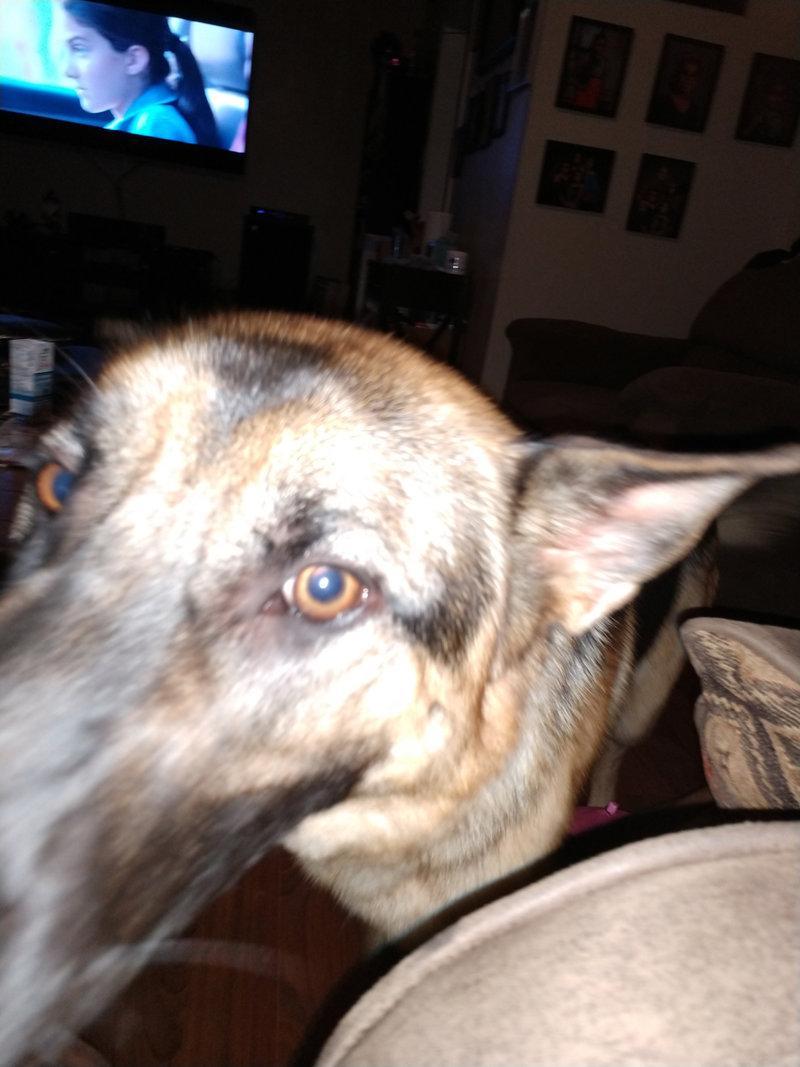 Dog.thumb.jpg.b6b361814367e2b0bb31a26b717aff8c.jpg