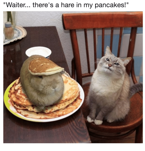 waiter-theres-a-hare-in-my-pancakes-40320071.png