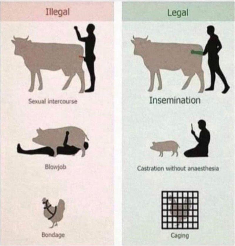 illegalanimal.jpg