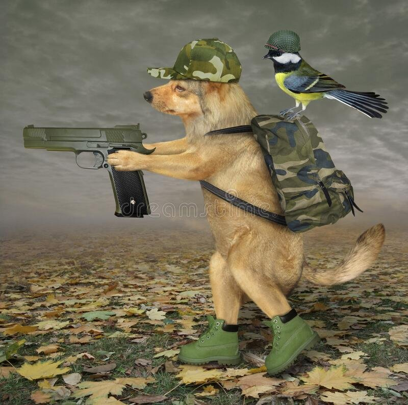 dog-walks-gun-forest-beige-military-uniform-walking-autumn-bird-army-helmet-seats-his-backpack-186764728.jpg